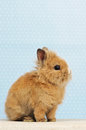 Baby rabbit Stock Photos