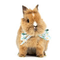 Baby rabbit with a bow on white background Stock Photo
