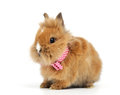 Baby rabbit with a bow on white background Stock Image