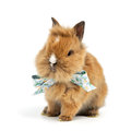 Baby rabbit with a bow on white background Royalty Free Stock Images