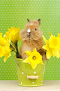 Baby rabbit sitting in a green flower pot with daffodils Royalty Free Stock Photos