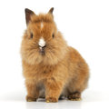 Baby rabbit on white background Stock Images