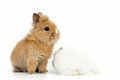 Baby rabbit on white background Royalty Free Stock Images