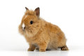 Baby rabbit on white background Royalty Free Stock Image