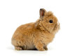 Baby rabbit on white background Royalty Free Stock Photos