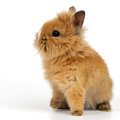 Baby rabbit on white background Royalty Free Stock Photo