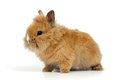 Baby rabbit on white background Stock Photos