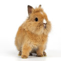 Baby rabbit on white background Royalty Free Stock Photography