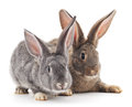Baby rabbits grey and brown on a white background Royalty Free Stock Photography