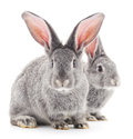 Baby rabbits grey on a white background Royalty Free Stock Photography