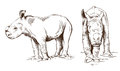 Baby rhinos vector sketch of two white from africa Stock Images