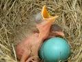Novorodeniatko červienky vtáctvo