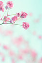 Baby s breath flowers on textured background pink light blue pastel shabby chic soft and delicate floral pattern Royalty Free Stock Photography
