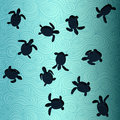 Baby Sea Turtles Royalty Free Stock Photo