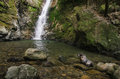 Baby seal in natural forest pool with waterfall Royalty Free Stock Photo
