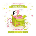 Baby Shower or Arrival Card - Baby Flamingo Girl in a Box Royalty Free Stock Photo