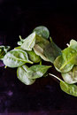 Baby spinach close up of leaves on a black table Royalty Free Stock Image