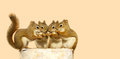 Baby squirrels sharing. Royalty Free Stock Photos