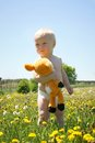Baby with stuffed animal in field a cute boy stands a of dandelions looking off the distance while holding a deer Royalty Free Stock Photos