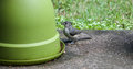 Baby Titmouse- Are You My Mom?
