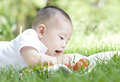 A baby and tomato an asian on grass is looking at trying to get tomatoes Stock Image