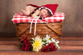 Baby wearing a little red riding hood costume day old newborn girl dressed as and sleeping on vintage wooden picnic basket Stock Image