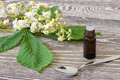 Bach flower remedies of white chestnut with blossoms on wooden background Royalty Free Stock Photography