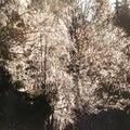 Back-light tree texture Royalty Free Stock Photo