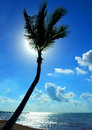 Back Lit Palm Tree Stock Image