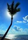 Back Lit Palm Tree Royalty Free Stock Photo