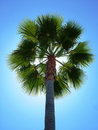 Back Lit Palm Tree Stock Photography