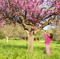 Back side of happy kid near the cherry blossom tree , explore and adventure concept. Royalty Free Stock Photo