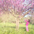 Back side of happy kid near the cherry blossom tree , explore and adventure concept. glitter overlay Royalty Free Stock Photo