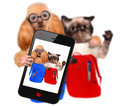 Back to school cat and dog taking photo with smartphone Royalty Free Stock Image