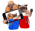 Back to school cat and dog taking a selfie Royalty Free Stock Images