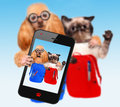 Back to school cat and dog taking a selfie Royalty Free Stock Photos