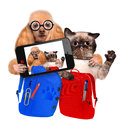 Back to school cat and dog taking a selfie Royalty Free Stock Photo