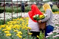 The back of two Muslim worker girls are collecting the flowers in garden during day time with one girl wear red hijab and the Royalty Free Stock Photo