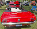 Back view of a 1960's red Ford Mustang Royalty Free Stock Photo
