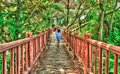 back view of female tourist walking on path in the forest Royalty Free Stock Photo