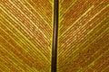 Backgound - Bird-nest fern and spore Royalty Free Stock Photo