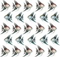 Background with angelfishes aquarium fishes Royalty Free Stock Photos