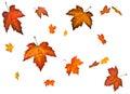Background An Autumn Leaf Fall