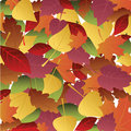 Background of autumn leaves Stock Photo