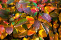 Background from autumn leaves Royalty Free Stock Photo