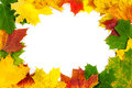 Background of autumn leaves beautiful Stock Images
