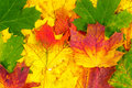 Background of autumn leaves beautiful Royalty Free Stock Photography