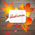 Background with autumn leaves bright creative Royalty Free Stock Image