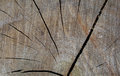 Background bark brown Royalty Free Stock Photo