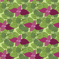 Background of basil vector design seamless pattern with Royalty Free Stock Images